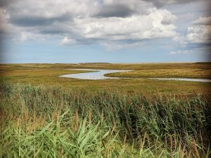 Cley and Salthouse Marshes