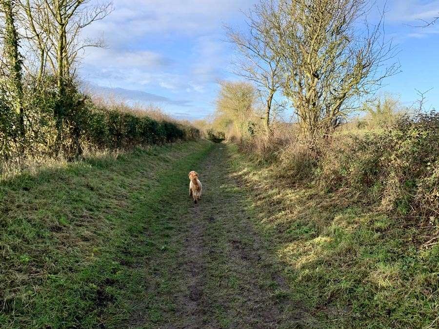 Burnhams Circular Walk Dog walking